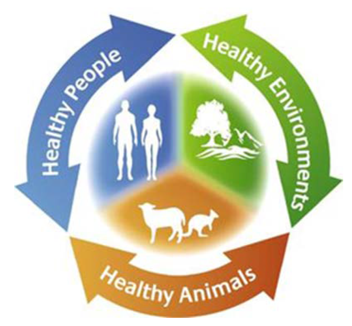 Graph showing cycle of human, animal and environmental wellbeing connection