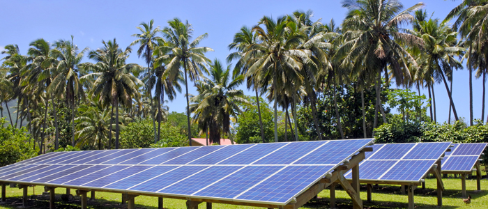 Three row of solar panel on gradd with palm trees in the backgrounds and a blue sky