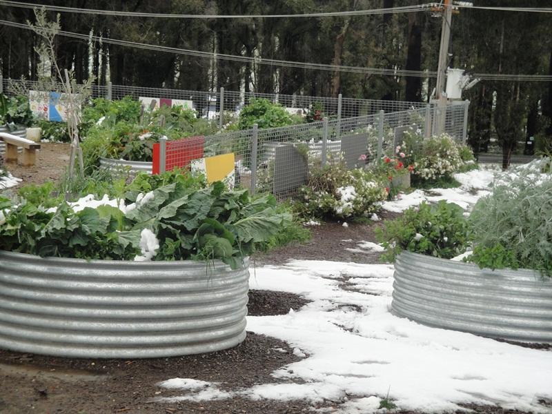 Middle Kinglake School's Temporary Vegetable Garden, 2010