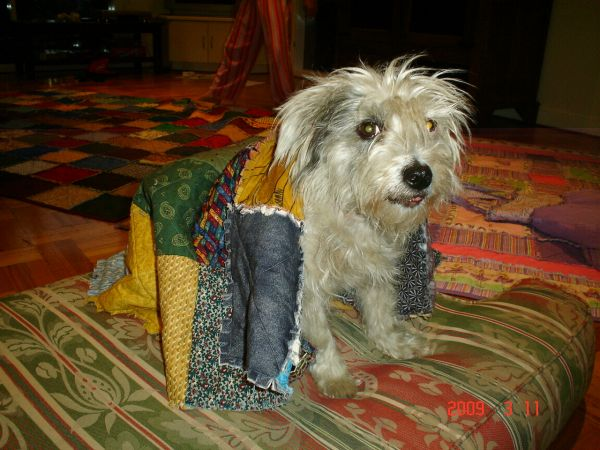 Our old boy Clyde took some time to adjust. The lovely quilt made for him by the Cotton Pickers was well loved.