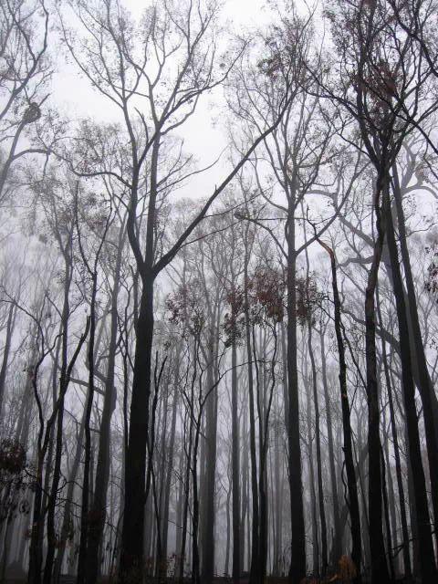 Post Fire Winter
