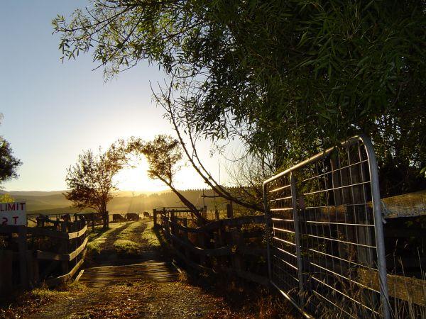 Nanowie Bridge Early Morning